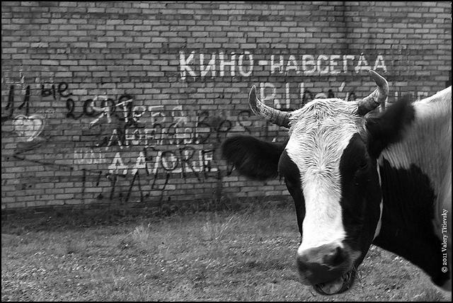 Деревня Подгорное (10)