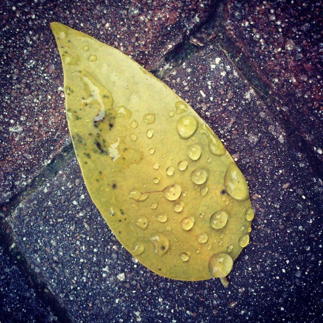 Листик с каплями от дождя