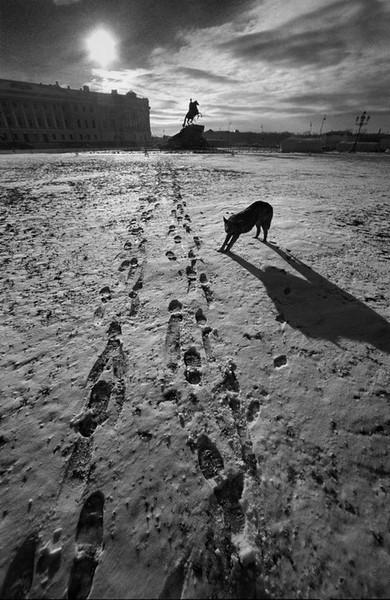 Санкт-Петербург. Russia. St.Petersburg, фото Александр Петросян (62)