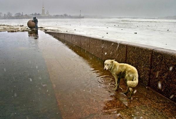 Санкт-Петербург. Russia. St.Petersburg, фото Александр Петросян (22)