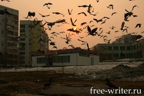 Городские голуби (2)