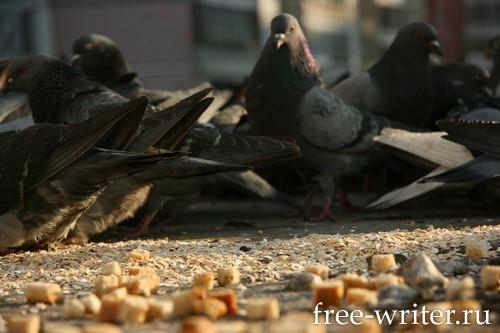 Городские голуби (9)