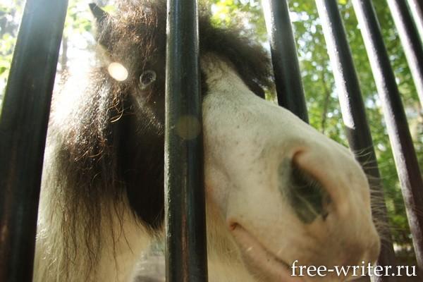 Пони в зоопарке