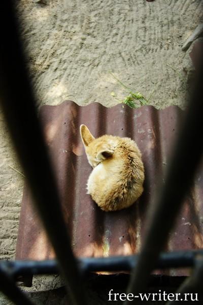 Лисёнок в новосибирском зоопарке