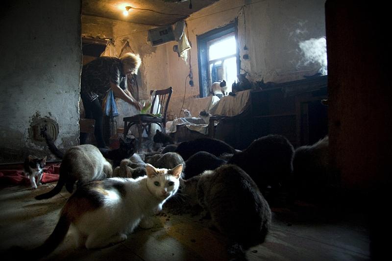 Много котов в доме