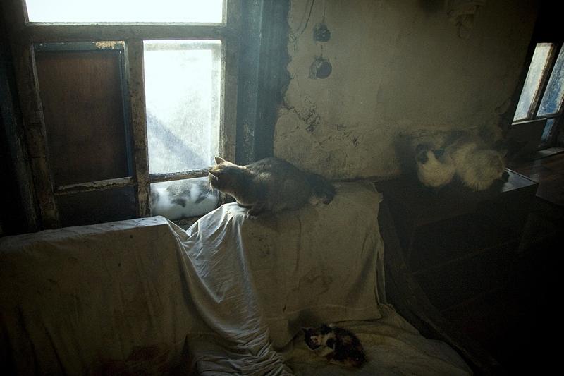 Фотоистория про женщину с котами. Бендюков