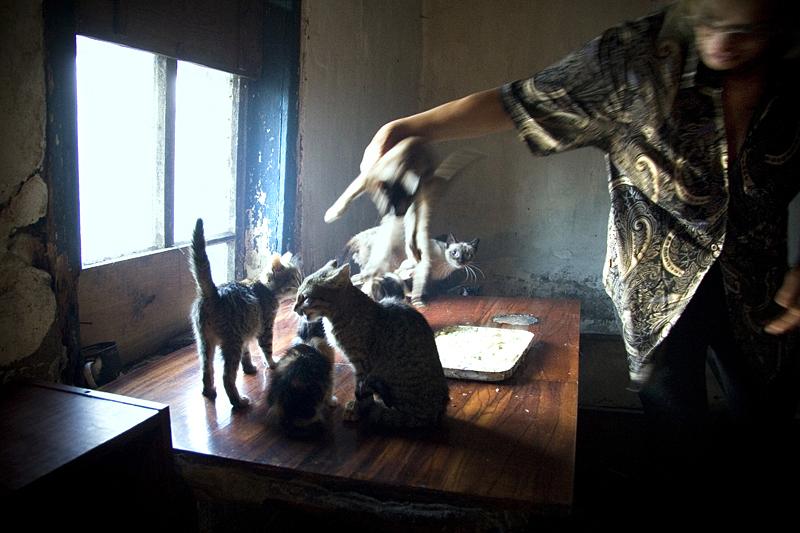 Кошки на столе