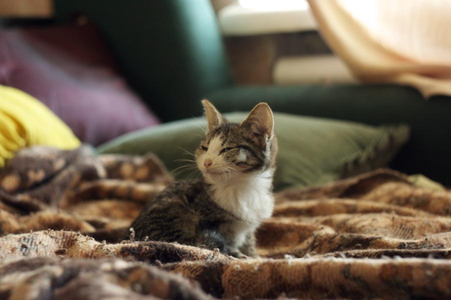Бродяжник и его коты