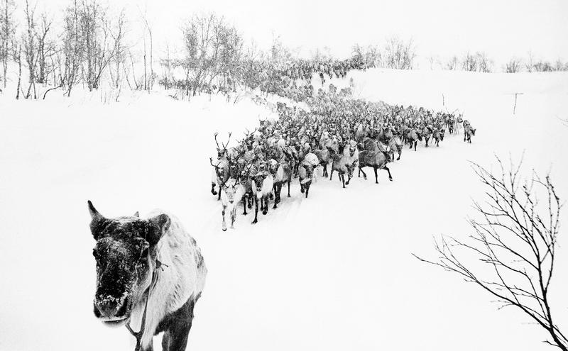 Фотоистория Оленный народ