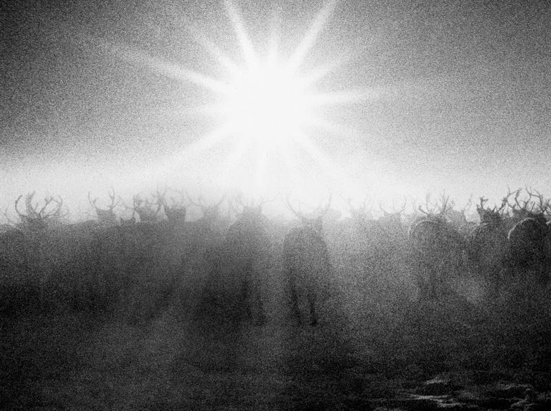 Солнце в Тундре