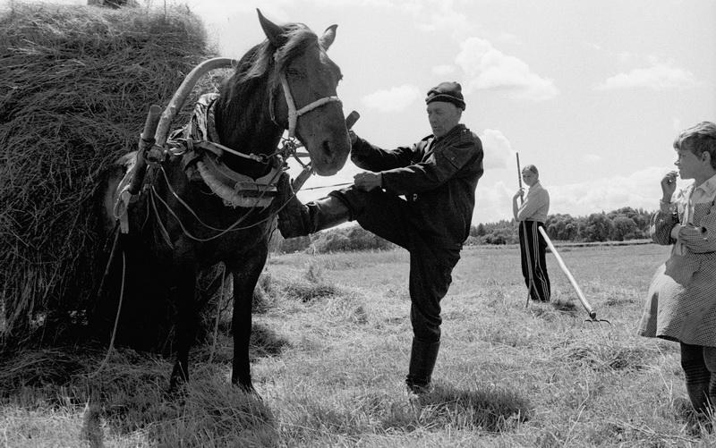 Лошади перевозят сено в деревне Киселёвка