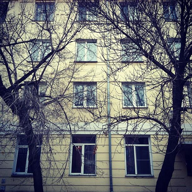 Жанровое фото iPhone (6)