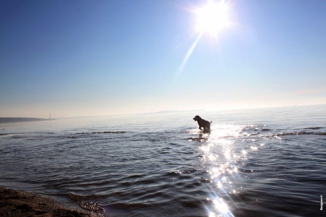 Собака на Обском море