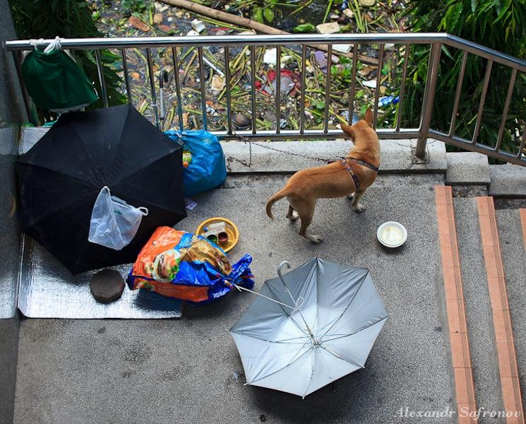 Наводнение в Бангкоке: как это было на самом деле (33)