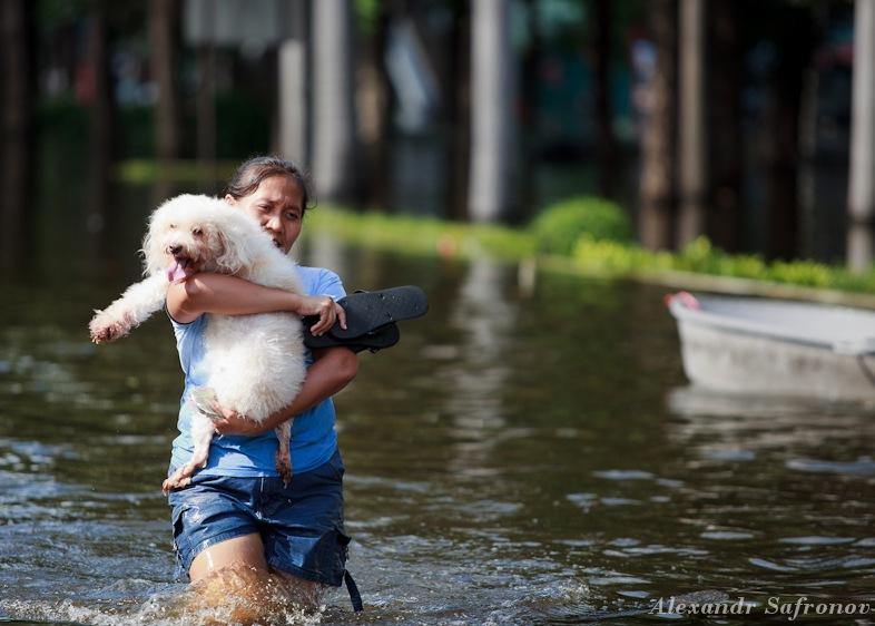 Наводнение в Бангкоке: как это было на самом деле (32)