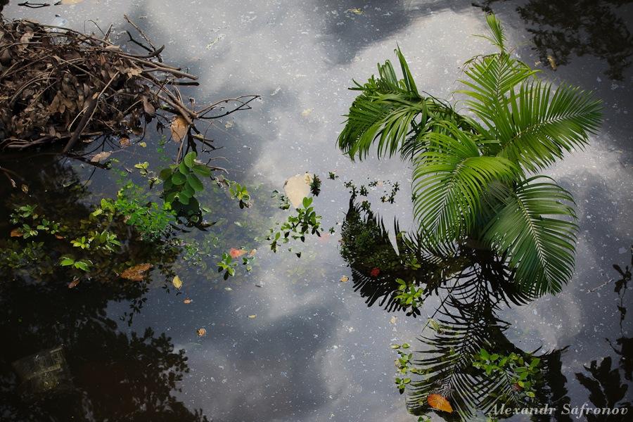 Наводнение в Бангкоке: как это было на самом деле (22)