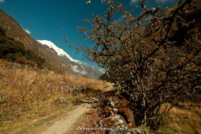 Горы Лангтанга, трек в Непале (74)