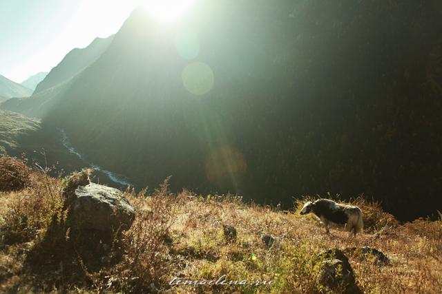 Горы Лангтанга, трек в Непале (66)