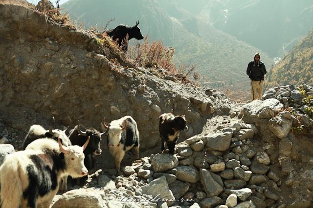 Горы Лангтанга, трек в Непале (35)