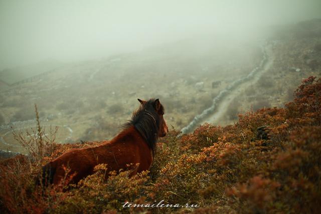 Горы Лангтанга, трек в Непале (28)