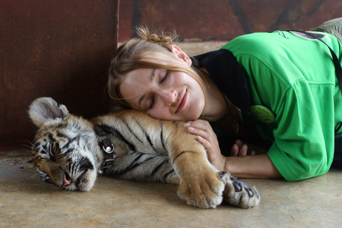 Будни тигриного монастыря в Таиланде (15)