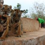 Скрытая жизнь Тигриного монастыря