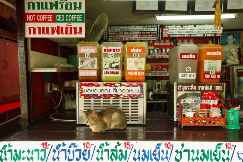 Золотой треугольник в Таиланде (6)