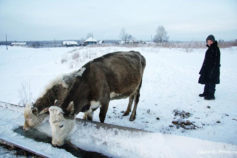 Лаптевка, деревня России
