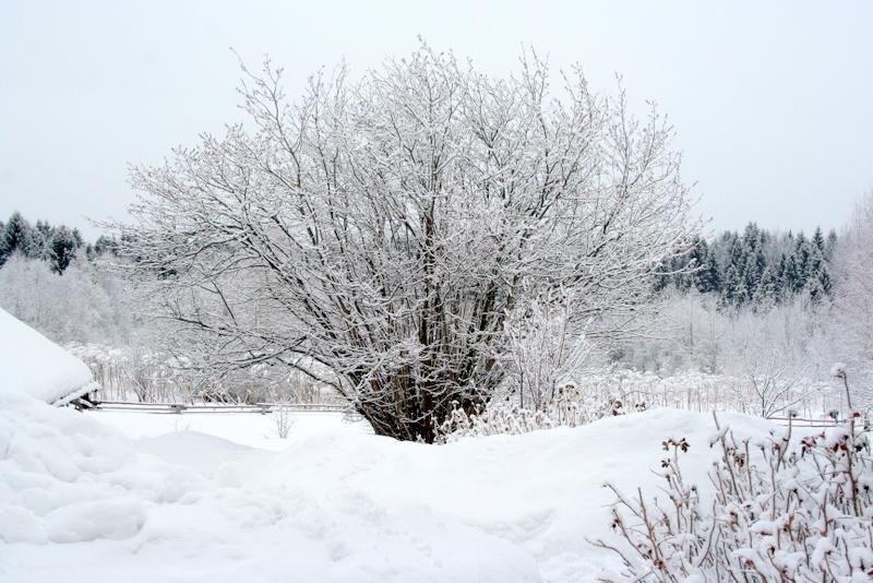 фото деревни зимой (28)