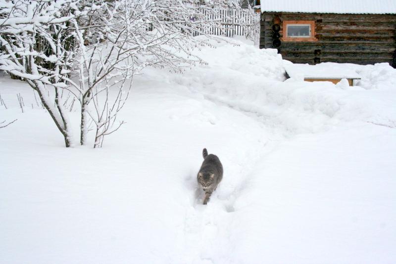 фото деревни зимой (19)