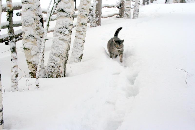фото деревни зимой (12)