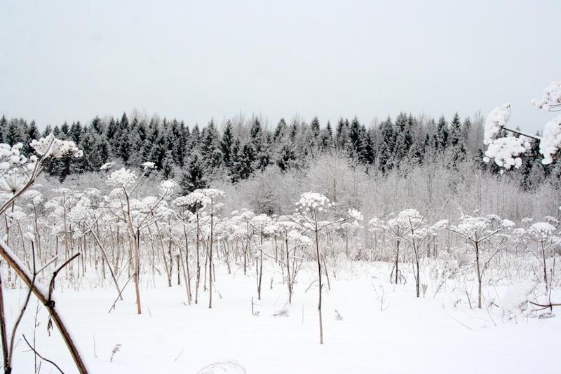 фото деревни зимой (11)