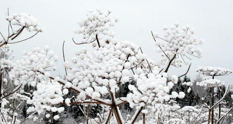 фото деревни зимой (8)