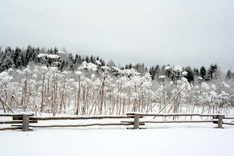 фото деревни зимой (5)