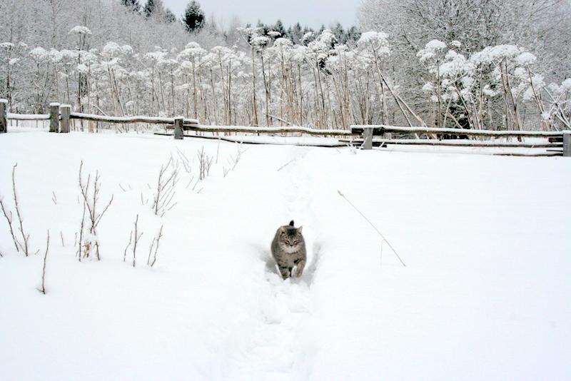 фото деревни зимой (4)