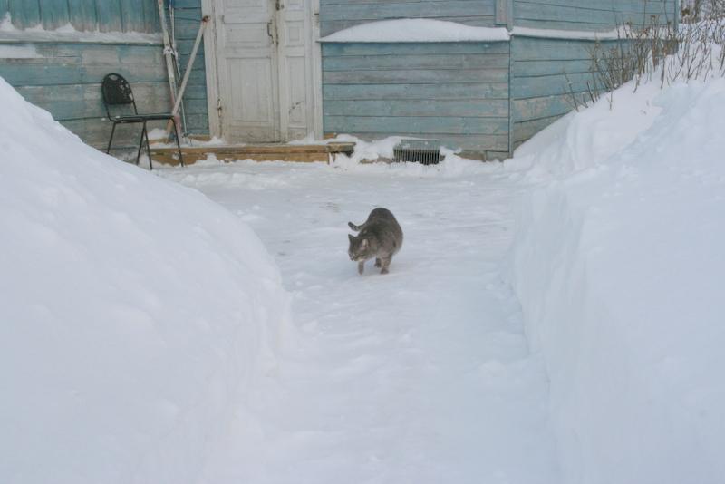 Снегопад в деревне (26)