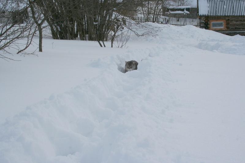 Снегопад в деревне (22)