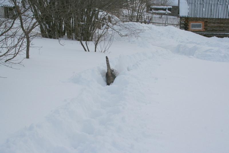 Снегопад в деревне (20)