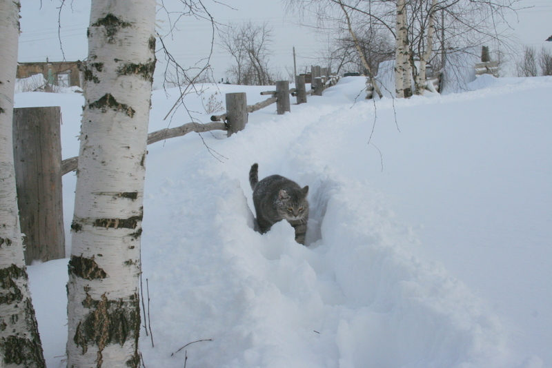 Снегопад в деревне (19)