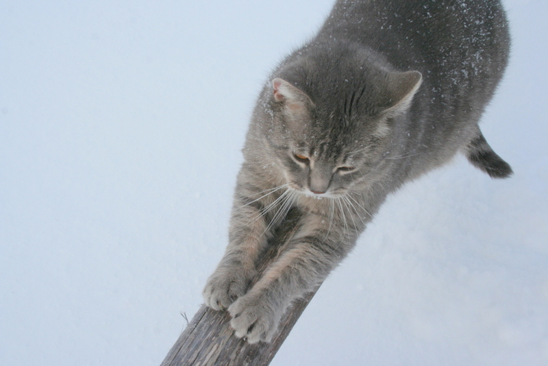 Снегопад в деревне (18)