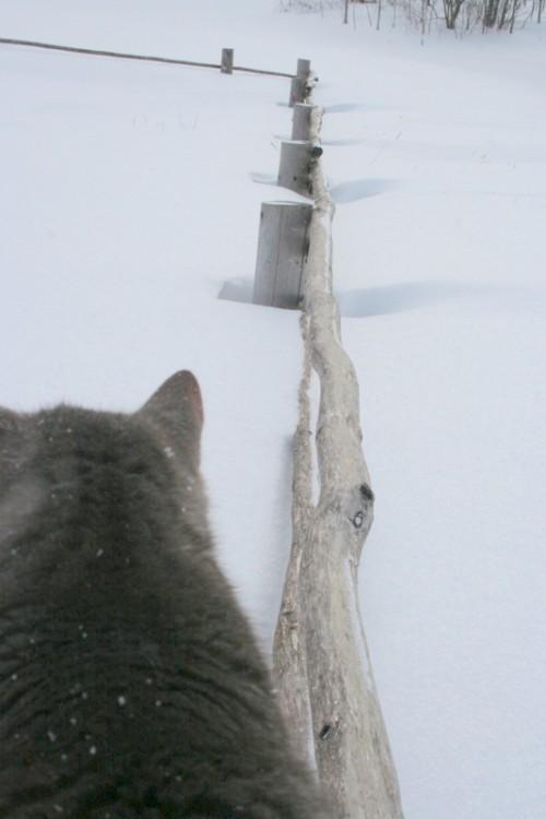 Снегопад в деревне (17)