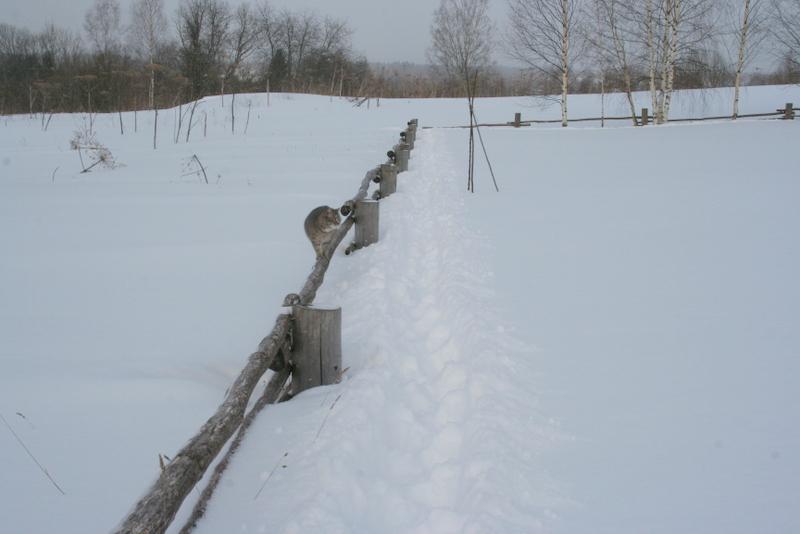 Снегопад в деревне (16)