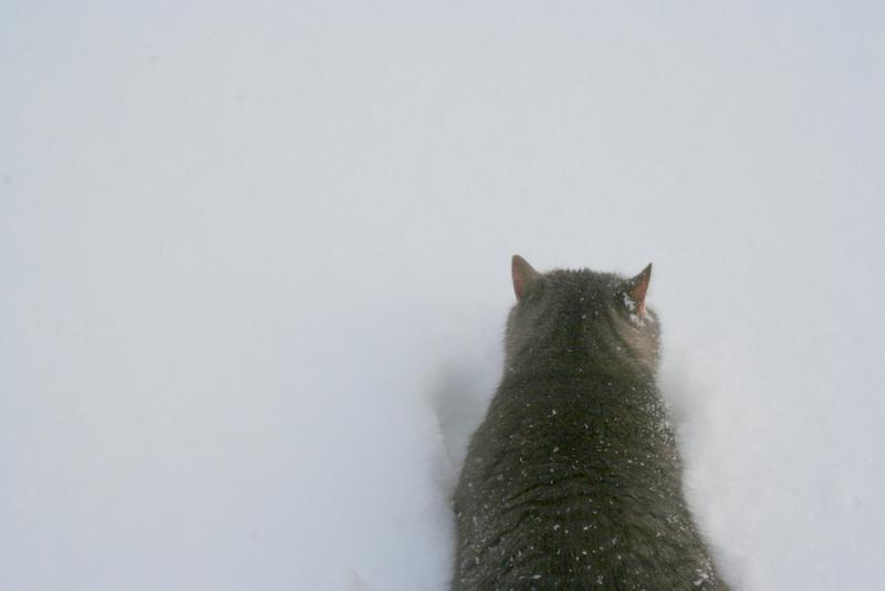 Снегопад в деревне (15)