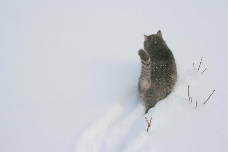 Снегопад в деревне (14)