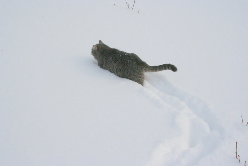 Снегопад в деревне (13)