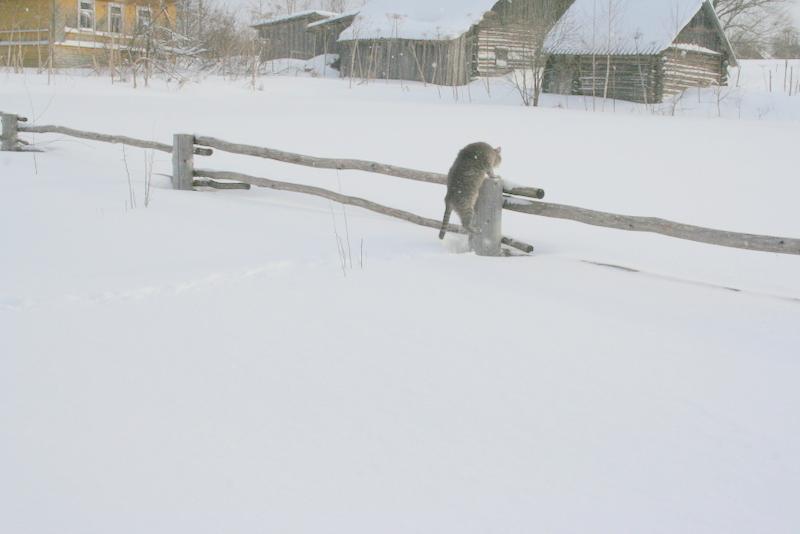 Снегопад в деревне (11)