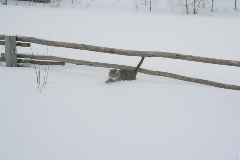 Снегопад в деревне (10)