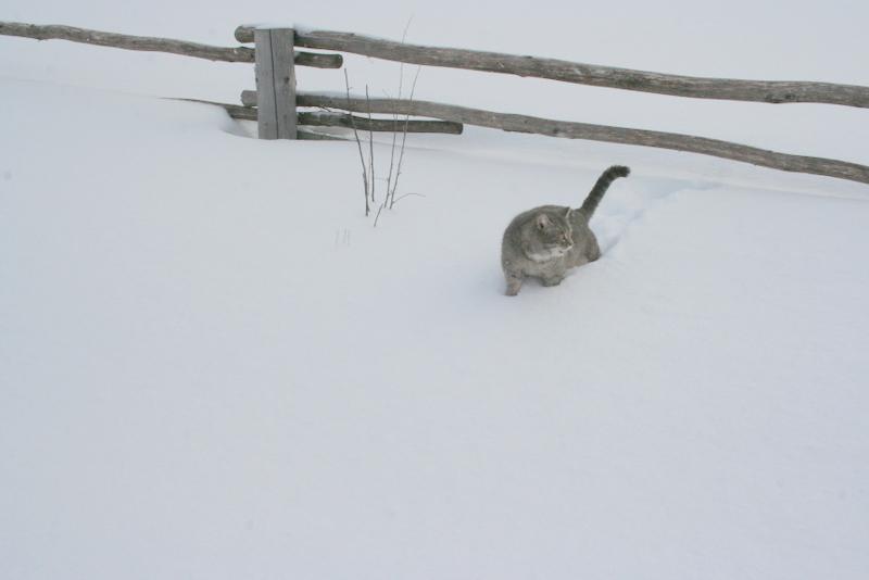 Снегопад в деревне (9)