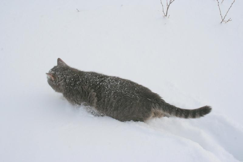 Снегопад в деревне (8)
