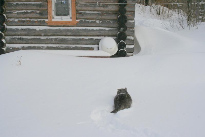 Снегопад в деревне (7)